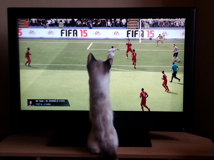 A cat attacking a television as a football video game is being played.