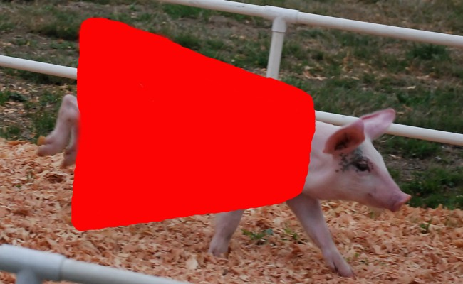 A pig with a red dress that has been added in Photoshop
