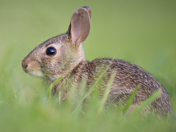 A rabbit in a meadow.