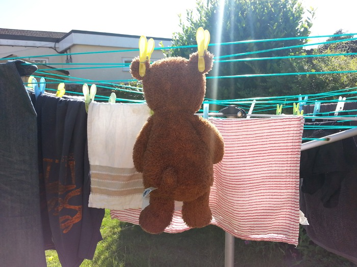 A teddy bear drying on a washing line.