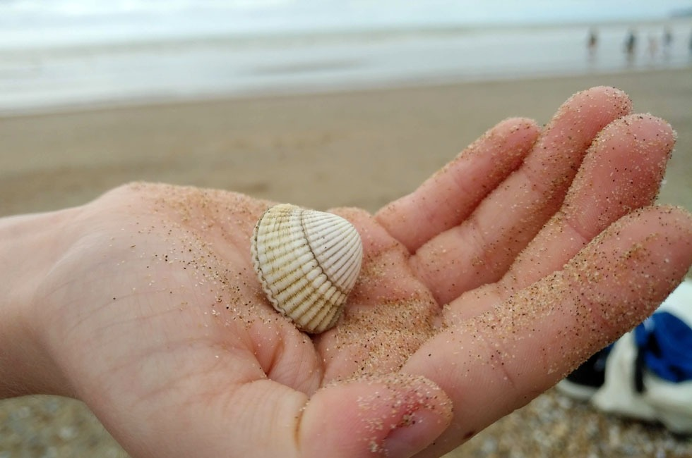 A child's hand holding a shell.