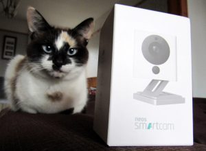 A cat sitting next to the Neos SmartCam.