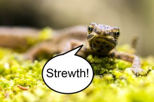 "A newt with a speech bubble saying ""Strewth!"" Animals according to my five-year-old."
